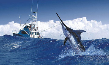 Marlin tournament